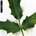 HerbariumCode: OCOLIN - Herbarium: Olivier Colin - Number plant: 5201 - Number picture: 02